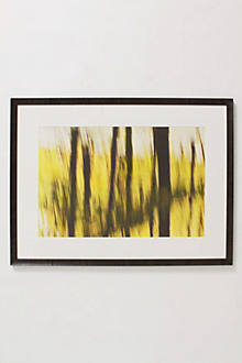Trunks Over Yellow, 2004