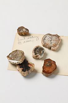 Petrified Wood Magnets