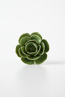 Lenten Rose Knob