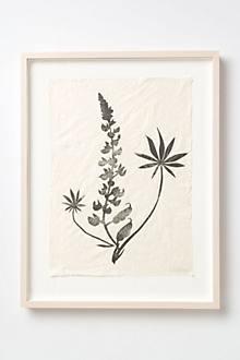 Lupine Print