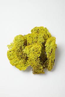 Terrarium Filler, Moss
