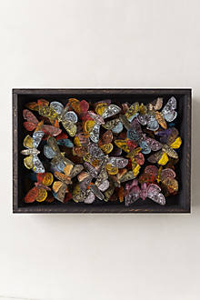 Moth Collection Shadow Box