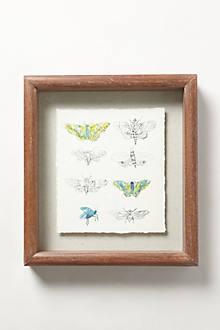 Flora & Fauna Framed Print