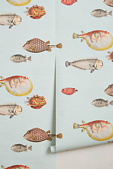 Aquario Wallpaper