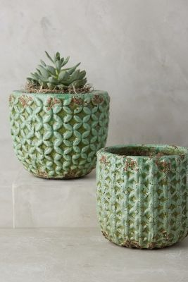 Shade Tree Garden Pot