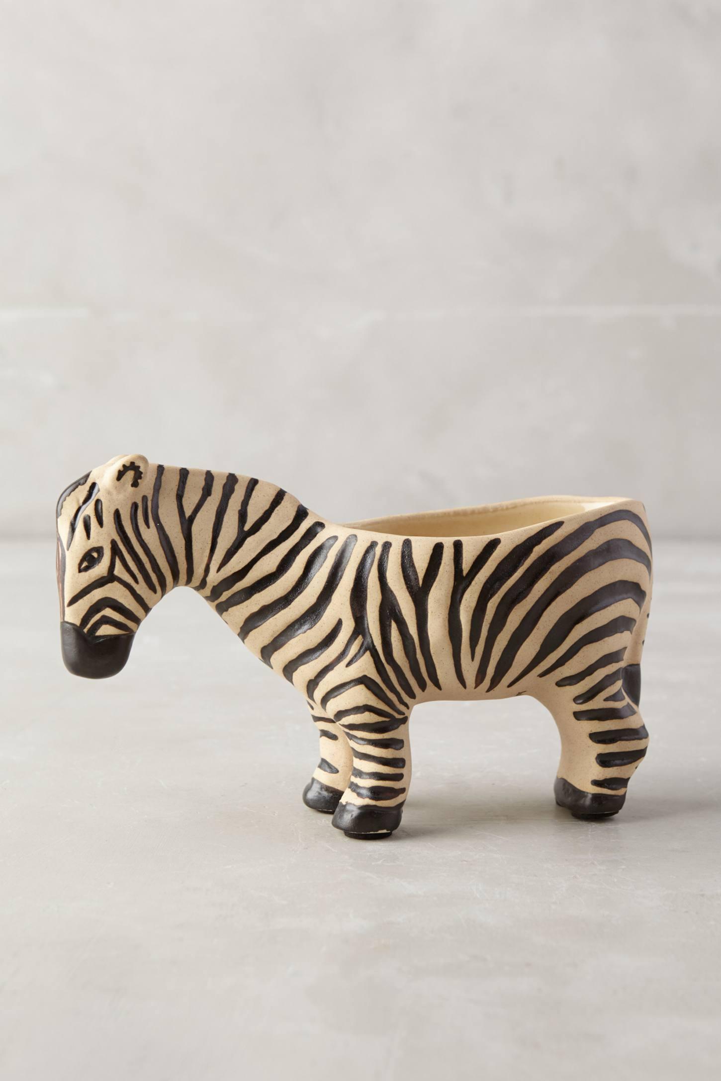 Wild Wanderer Zebra Planter