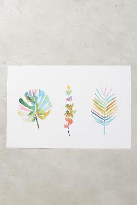 Succulent Spectrum Print