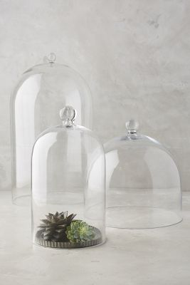 Glass Display Cloche