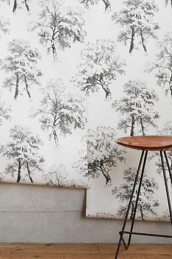 Slide View: 2: Deciduous Forest Wallpaper