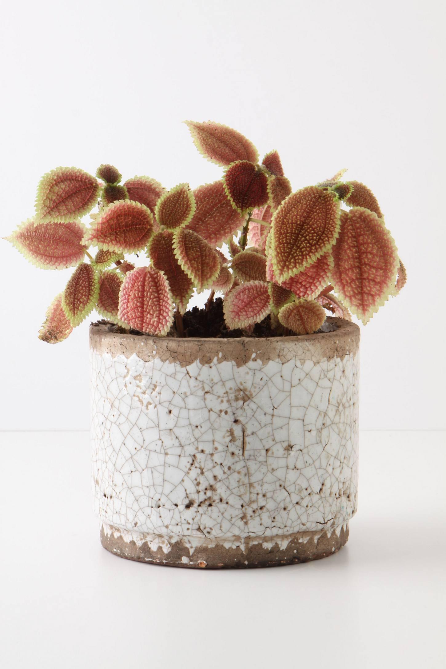Ivory Epoch Pot