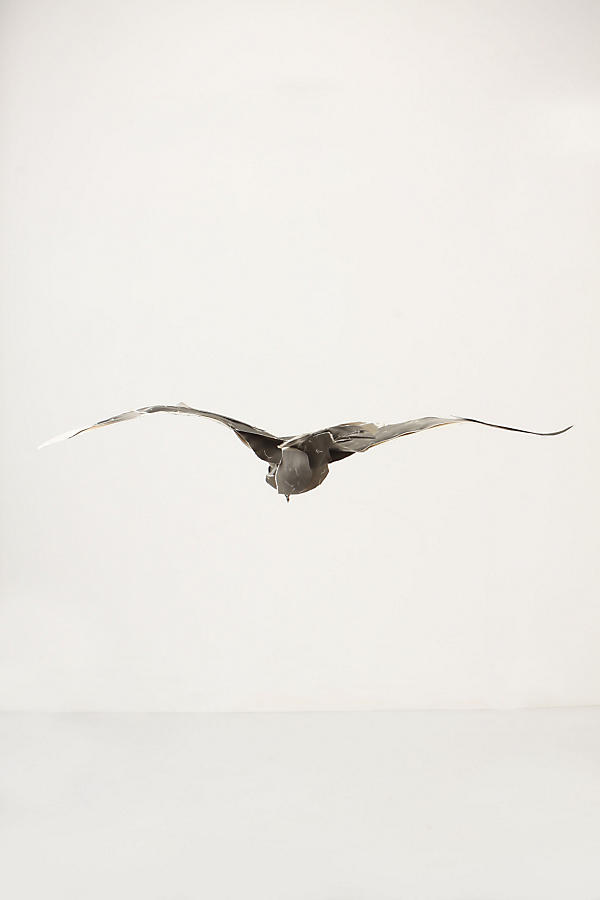 Great Winged Petrel, 2010