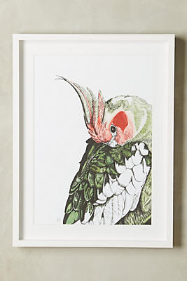 Anthropologie Wall Art cockatoo wall art | anthropologie