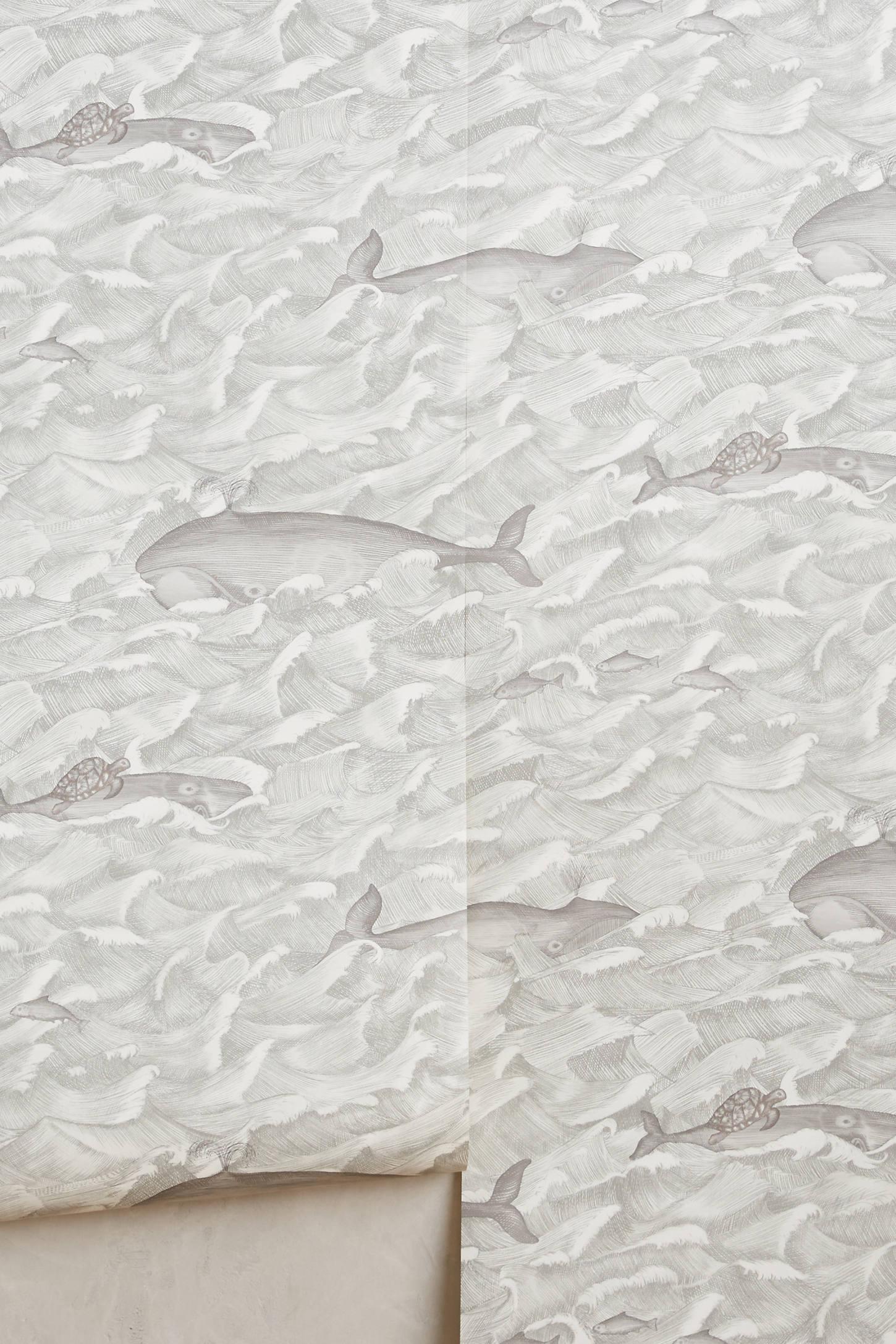 Whale Migration Wallpaper