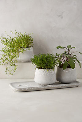 Herb Planter Fair Netara Herb Planter Set  Anthropologie Design Inspiration