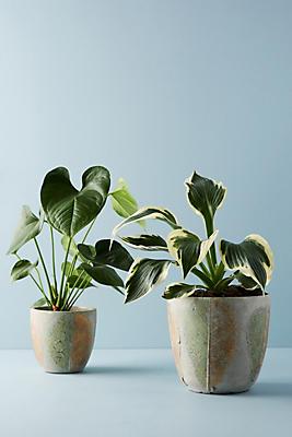 Slide View: 3: Pressed Leaf Pot