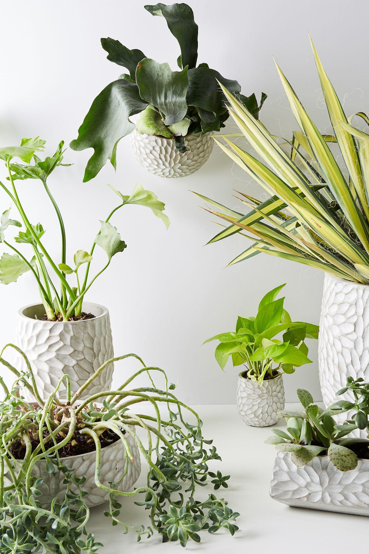Outdoor Hanging Planter Size hanging planter outdoor furniture garden accessories chrysanthemum pot workwithnaturefo