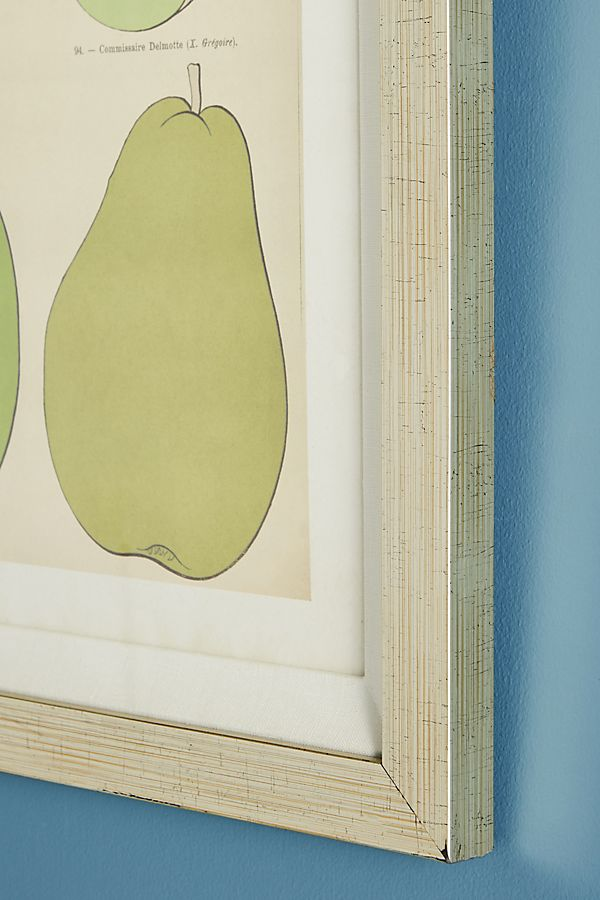Modern Pear Wall Art | Anthropologie