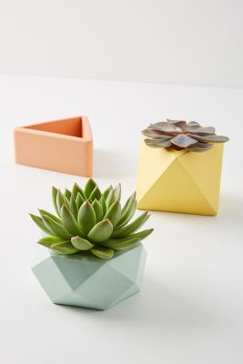Colourful Mini Pot by Anthropologie