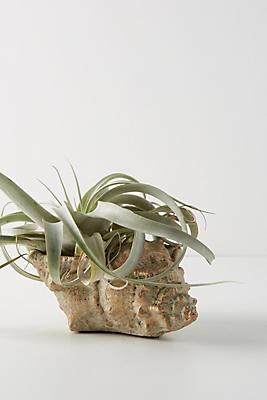 Slide View: 1: Shell Planter