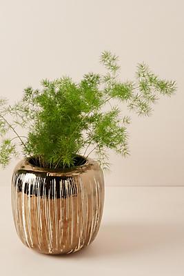 Slide View: 3: Copper-Striped Pot