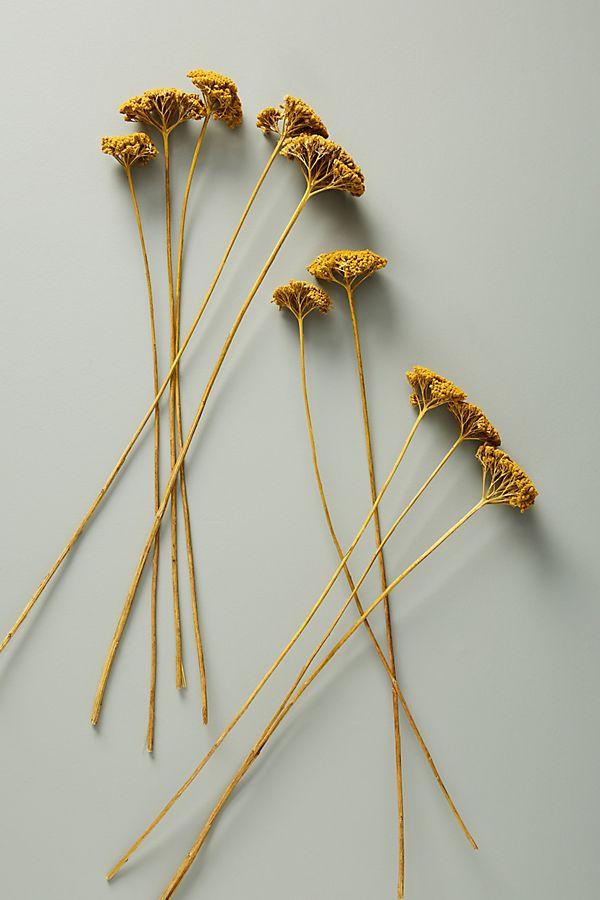 Slide View: 1: Dried Yarrow Bouquet