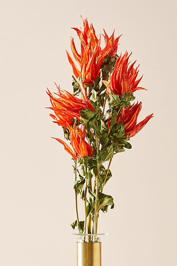 Slide View: 1: Preserved Indian Paintbrush Bouquet